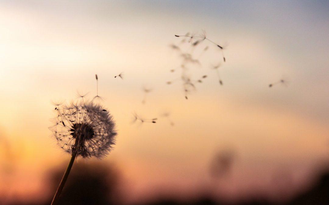 Η Δύναμη του Mindfulness